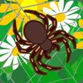 为什么蜘蛛能织网
