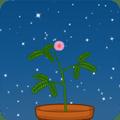 植物为什』么要睡觉