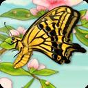 翩翩飞舞的蝴蝶